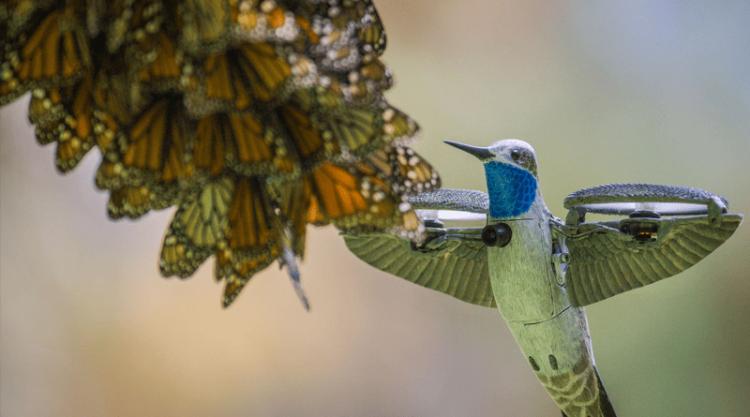 Dron koliber - Nature on PBS