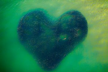 "Photo of the year - ""Love Heart of Nature "" by Jim Picôt"