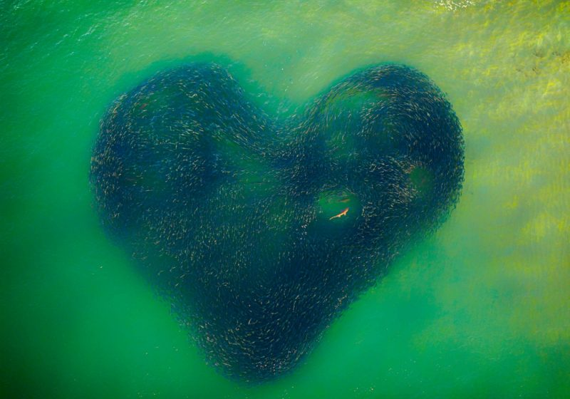 """Photo of the year - """"Love Heart of Nature """" by Jim Picôt"""